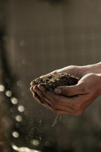 hand full of plant soil