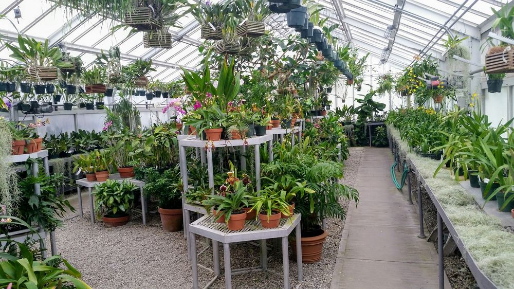 greenhouse for indoor plants